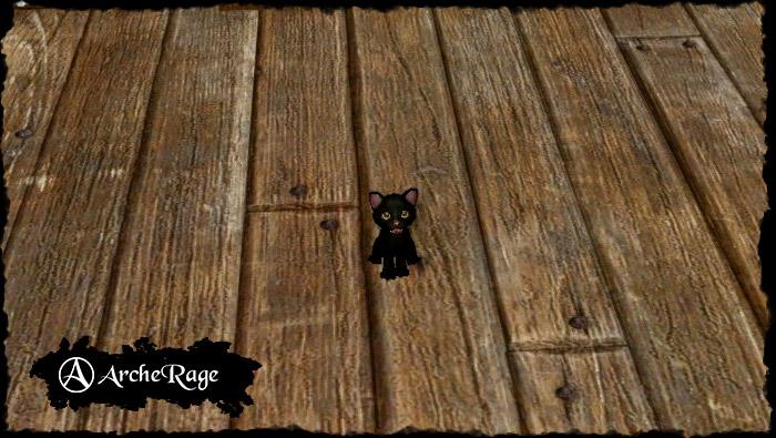black_kitten.1550520707.jpg