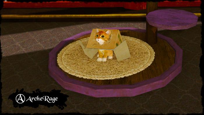 Inbox Orange Tabby Housepet.jpg
