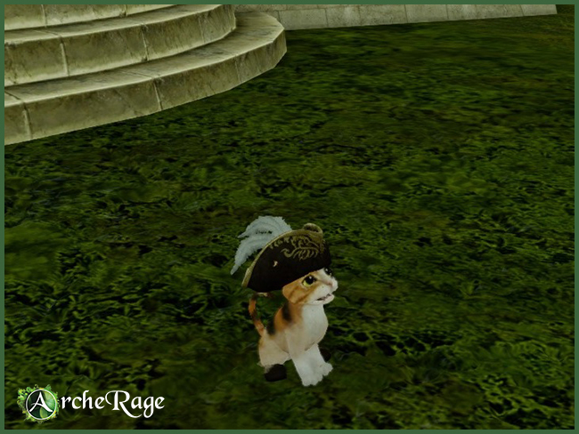 Pirate Calico Housepet.jpg