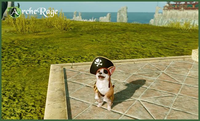 Уэльский Пират-Корги.jpg